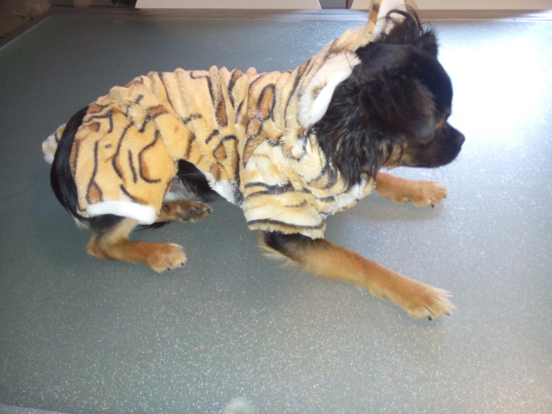 V tement chien combinaison polaire style tigre - Tigre polaire ...