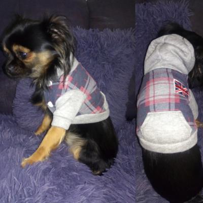 Vêtement chien, manteau sweat gris-carreaux et drapeau.